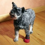 Why should my dog wear pet booties?