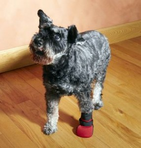 Dog wearing wound boot