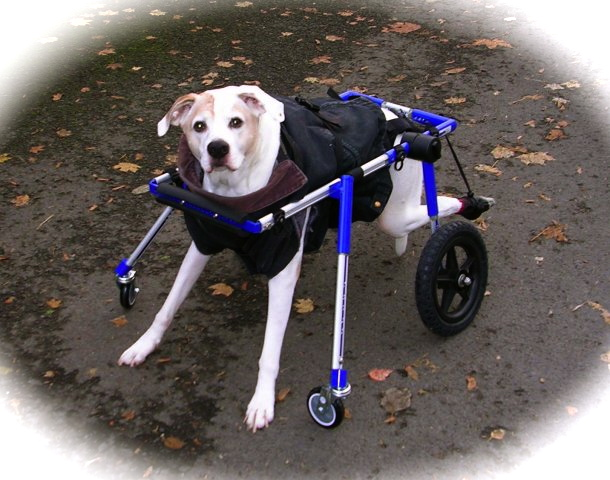 Dog Wheelchair Walkin' Wheels | Dog Wheelchairs, Dog Carts
