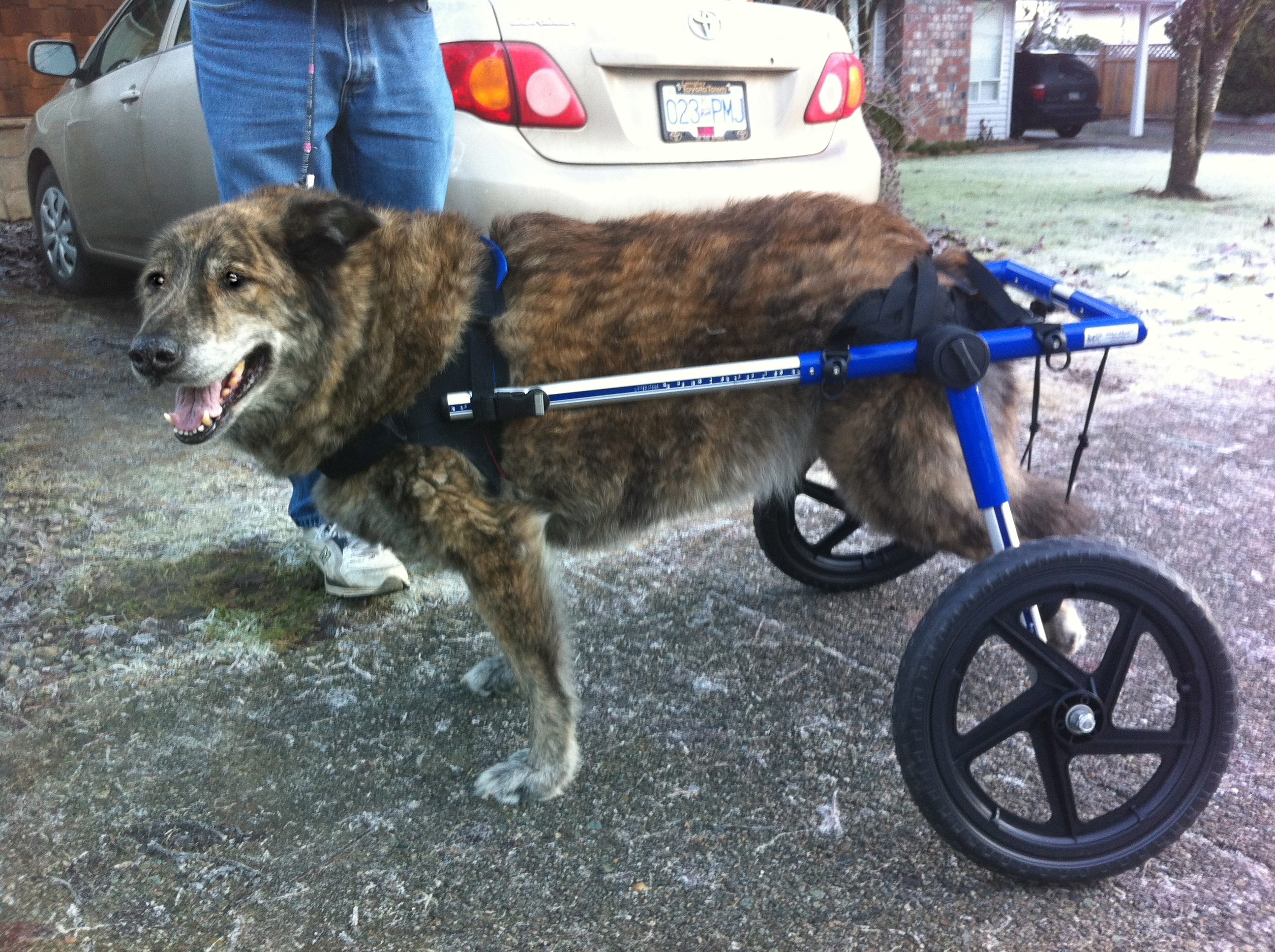 Dog Wheelchairs The Right Choice