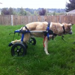 Whats' needed to know about adopting a Special Needs Dog