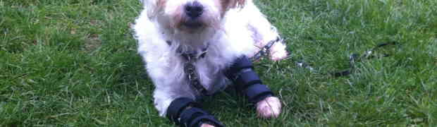 The advantages of a dog or cat Splint / Brace