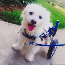 Dog Wheelchair Cat Wheelchair, Walkin' Wheels | Dog