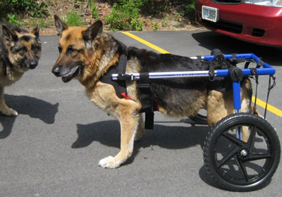 how to make a dog cart for wheelchair
