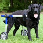 Walkin' Wheels, Dog wheelchair