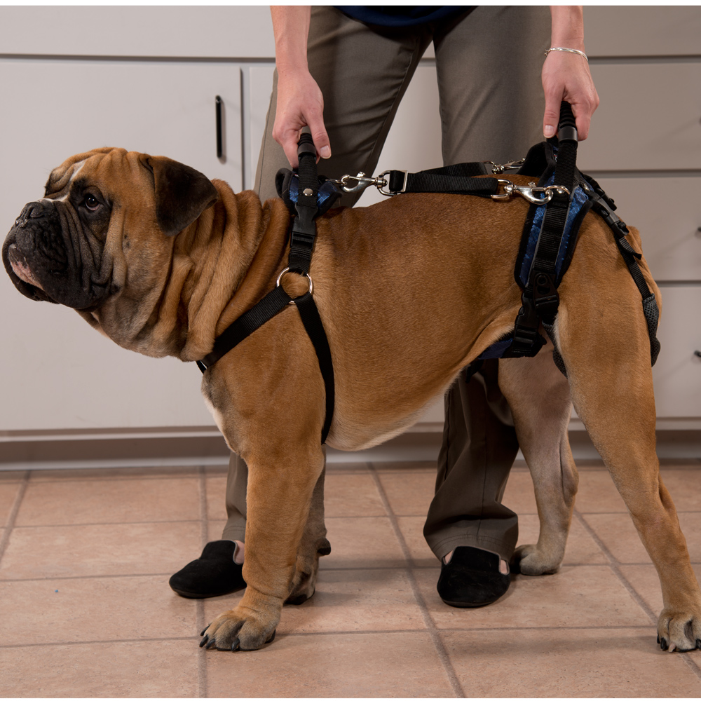 Dog Lifting Aid or Harness | Dog Wheelchairs, Dog Carts, Handicapped