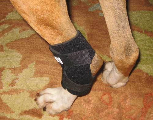 How To Wrap A Dog S Knee