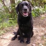 Dog Heros- DBoy & Penny