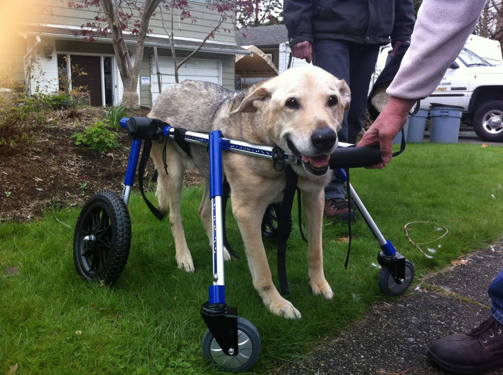 Trupanions Coverage Of Mobility Devices Dog Wheelchairs