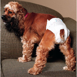 how to make a male dog diaper