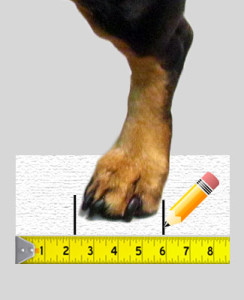 measurements dog boots