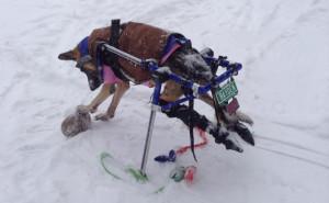 Hayden in Snow on skis