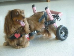 dog or cat wheelchair