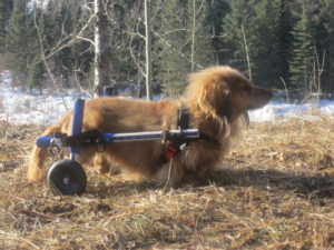 Small dog in Small wheelchair