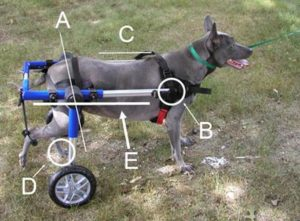 walkin wheels dog wheelchair set up