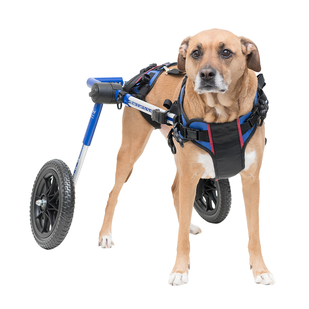 Dog lifting harness aid dog wheelchairs dog carts for Handicapped wheelchair
