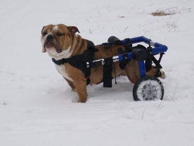 Dog Wheelchair Walkin' Wheels | Dog Wheelchairs, Dog Carts