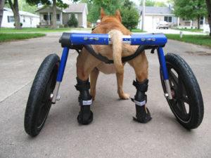 splintdog1