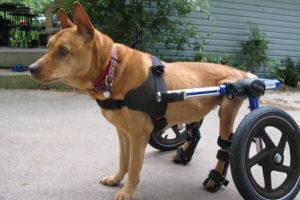 Dog Wheelchair, Walkin' Wheels