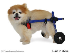 Dog/Cat Wheelchair