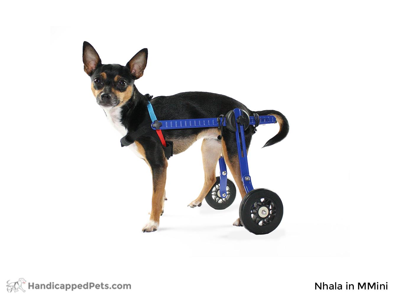Mini Dog Wheelchair | Dog Wheelchairs, Dog Carts
