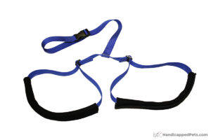 rear-support-leash-2
