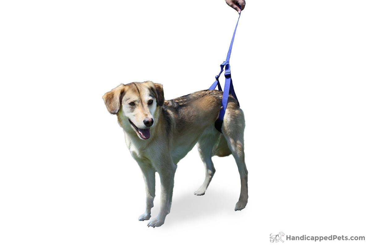 Dog Support Leash Dog Wheelchairs Dog Carts