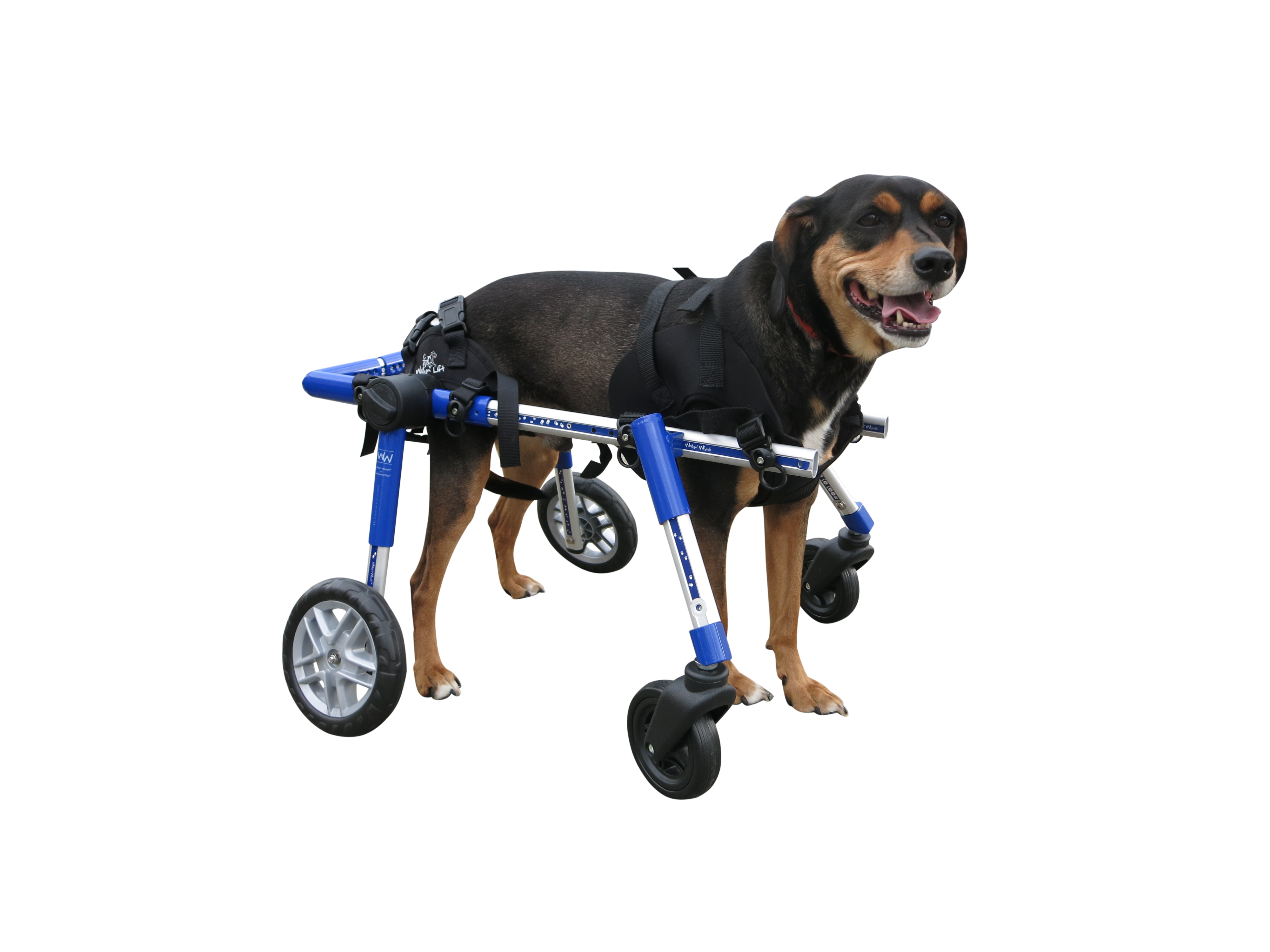 Dog Wheelchair Harness Dog Wheelchairs Dog Carts
