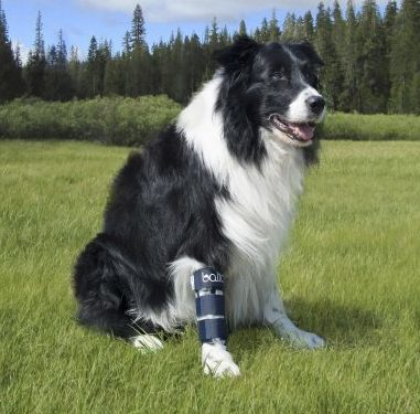 Lower limb braces for dogs   Dog Wheelchairs, Dog Carts