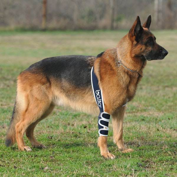 Dog/Cat Splints and Braces | Dog Wheelchairs, Dog Carts