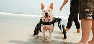 Sprite @ Rescue Paws!